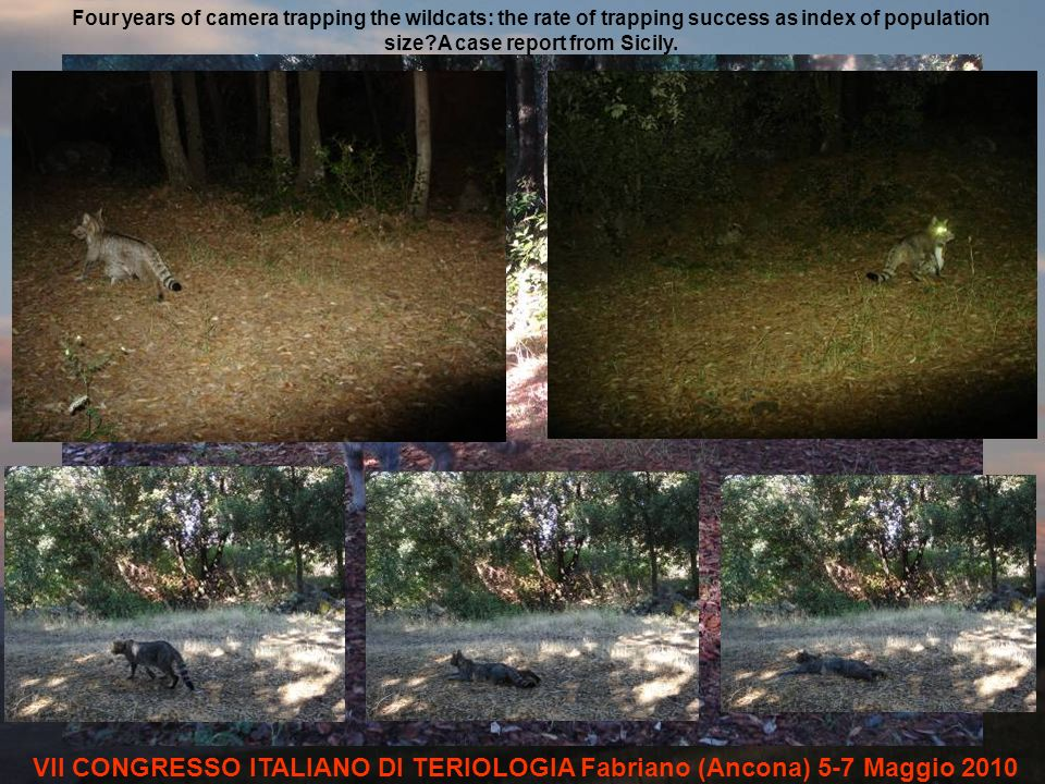 Four years of camera trapping the wildcats: the rate of trapping success as index of population size A case report from Sicily.