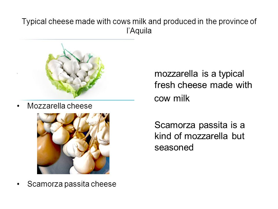 Typical cheese made with cows milk and produced in the province of lAquila Mozzarella chhesemmmmmmmmm m mozzarella cheese Mozzarella cheese Scamorza passita cheese mozzarella is a typical fresh cheese made with cow milk Scamorza passita is a kind of mozzarella but seasoned