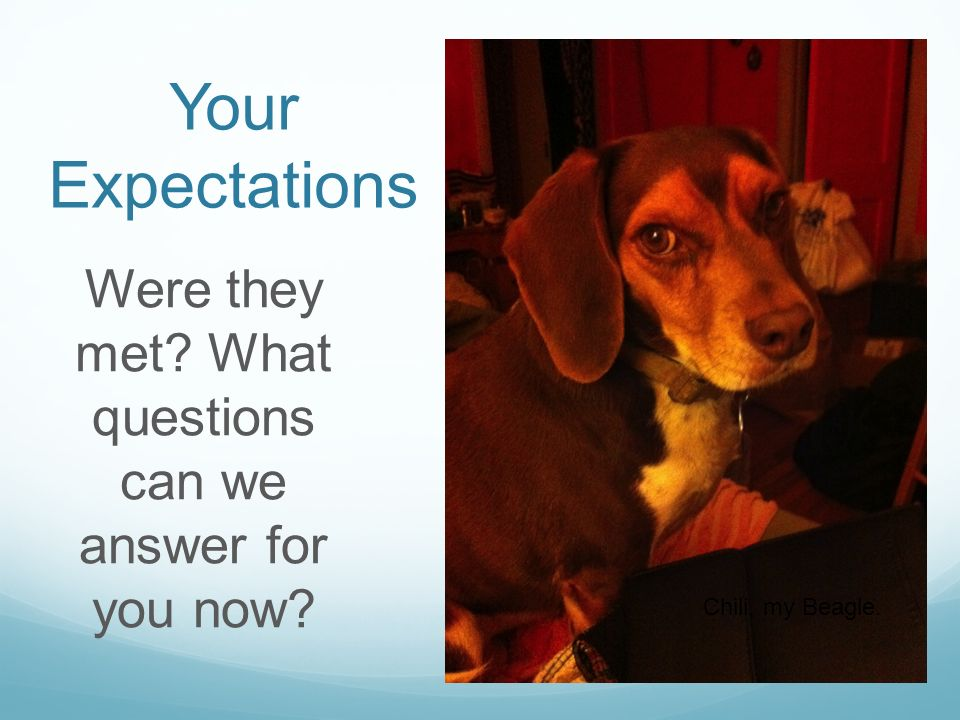 Your Expectations Were they met What questions can we answer for you now Chili, my Beagle.
