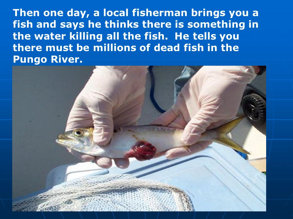 Then one day, a local fisherman brings you a fish and says he thinks there is something in the water killing all the fish.