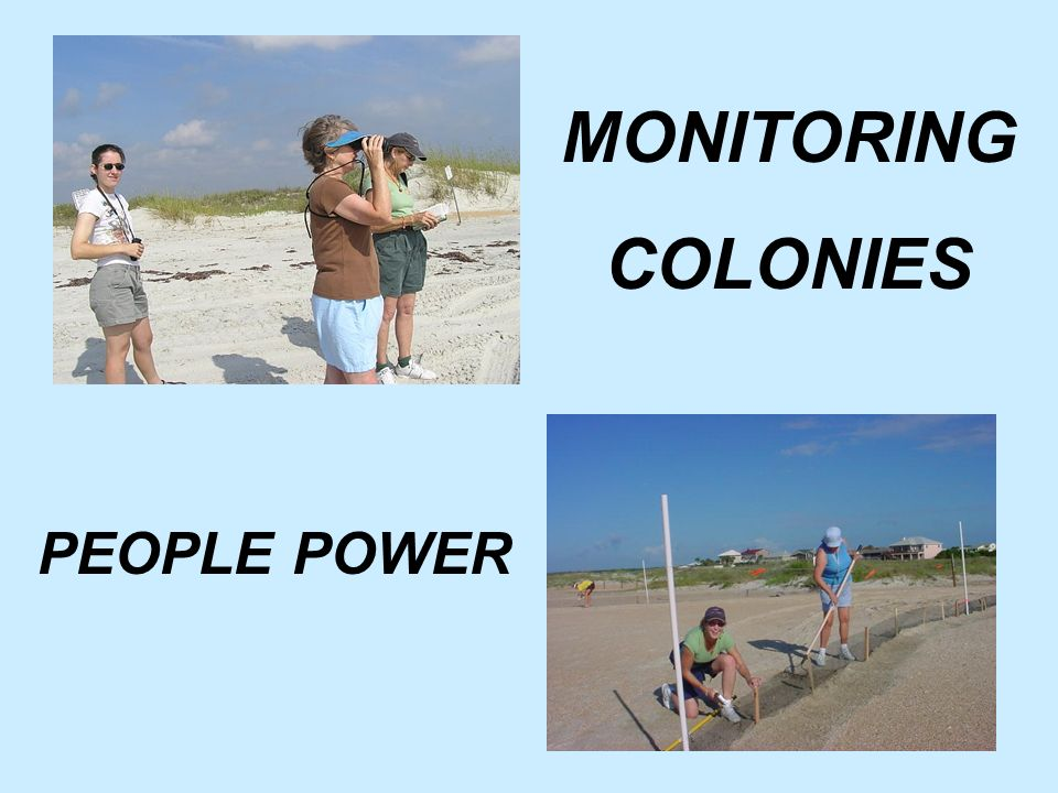 MONITORING COLONIES PEOPLE POWER