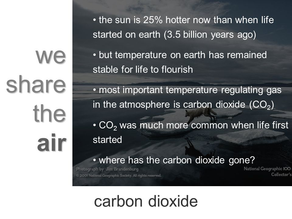 we share the air the sun is 25% hotter now than when life started on earth (3.5 billion years ago) but temperature on earth has remained stable for life to flourish most important temperature regulating gas in the atmosphere is carbon dioxide (CO 2 ) CO 2 was much more common when life first started where has the carbon dioxide gone.