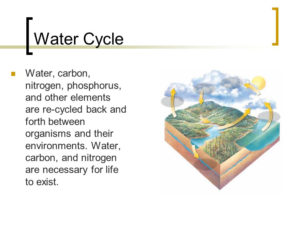 Water Cycle Water, carbon, nitrogen, phosphorus, and other elements are re-cycled back and forth between organisms and their environments.