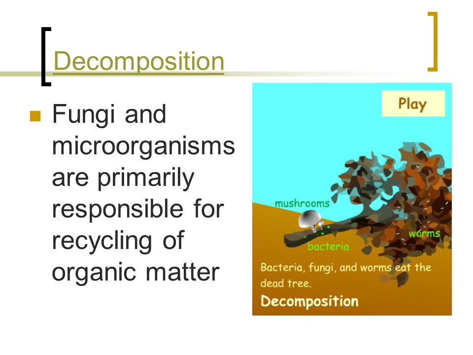 Decomposition Fungi and microorganisms are primarily responsible for recycling of organic matter