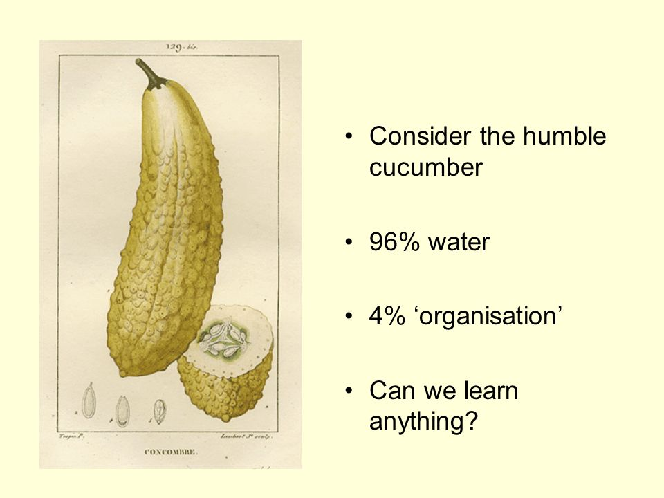 Consider the humble cucumber 96% water 4% organisation Can we learn anything