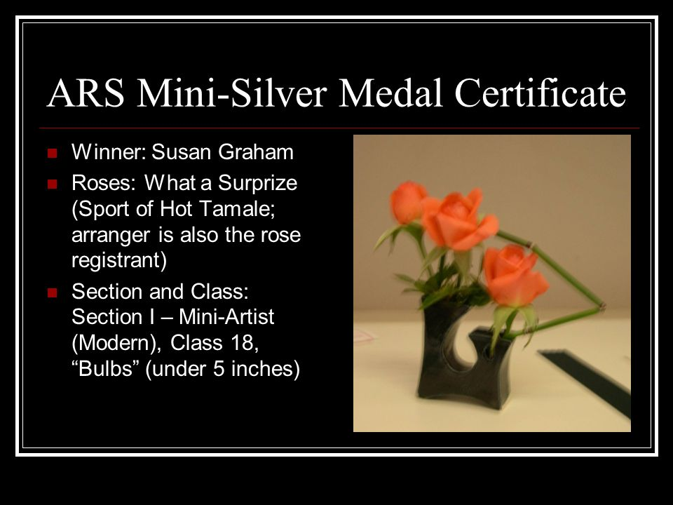 ARS Mini-Silver Medal Certificate Winner: Susan Graham Roses: What a Surprize (Sport of Hot Tamale; arranger is also the rose registrant) Section and Class: Section I – Mini-Artist (Modern), Class 18, Bulbs (under 5 inches)