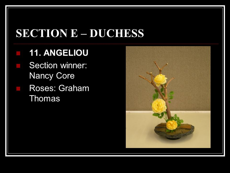 SECTION E – DUCHESS 11. ANGELIOU Section winner: Nancy Core Roses: Graham Thomas