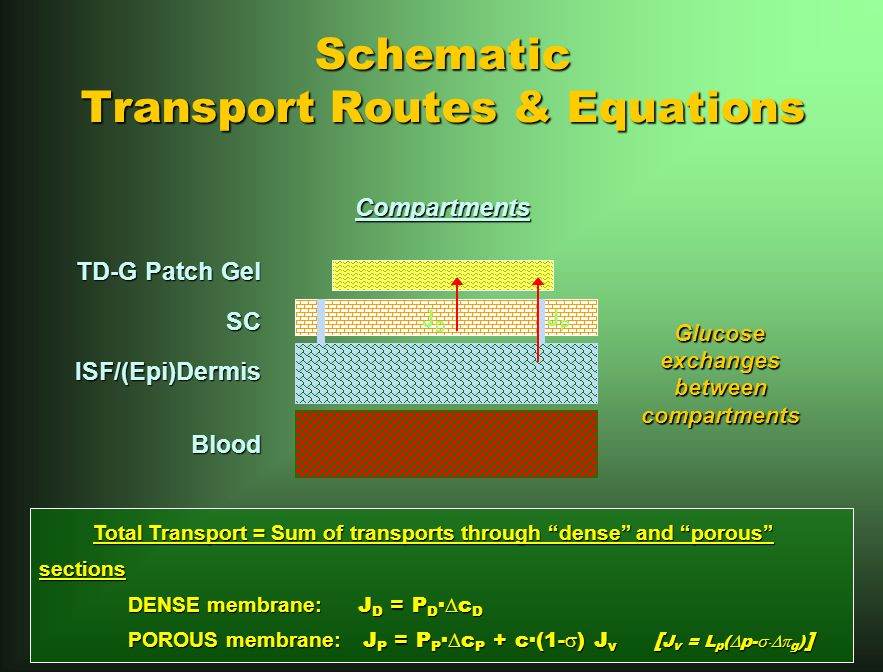 Schematic Transport Routes & Equations TD-G Patch Gel SCISF/(Epi)DermisBlood JPJP JDJD Total Transport = Sum of transports through dense and porous sections Total Transport = Sum of transports through dense and porous sections DENSE membrane: J D = P D · c D POROUS membrane: J P = P P · c P + c·(1- ) J v [ J v = L p ( p- g ) ] Compartments Glucoseexchanges between betweencompartments