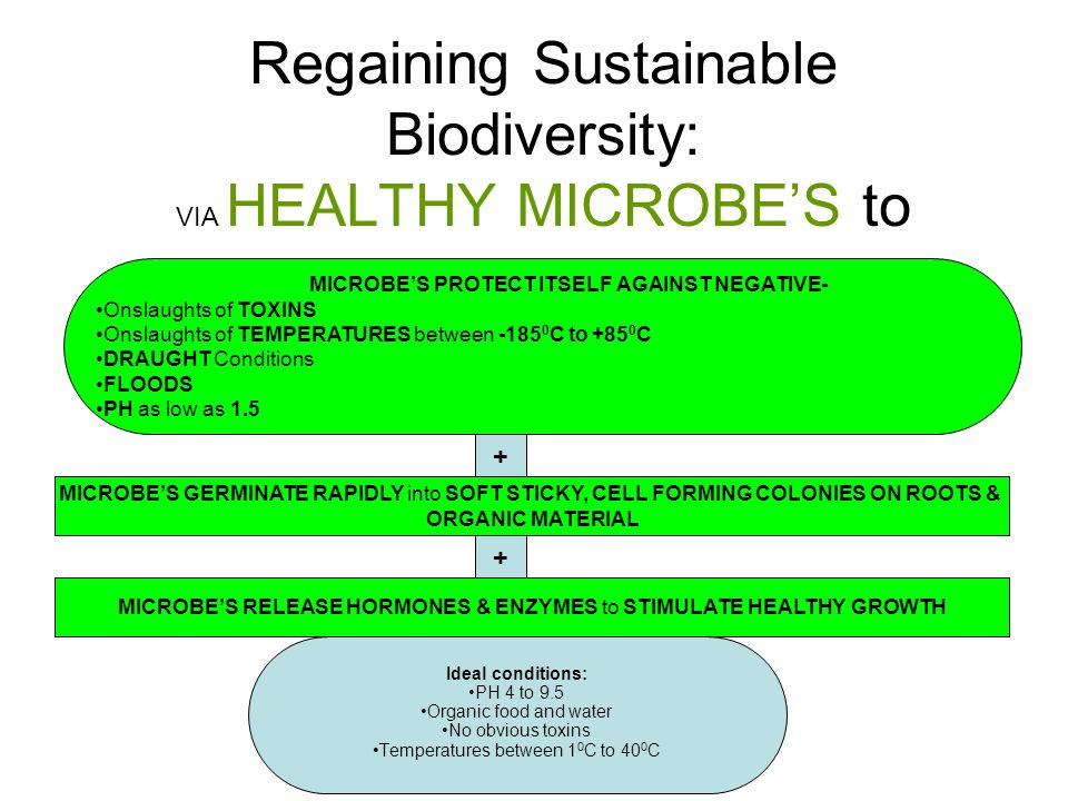 Regaining Sustainable Biodiversity: VIA HEALTHY MICROBES to Ideal conditions: PH 4 to 9.5 Organic food and water No obvious toxins Temperatures between 1 0 C to 40 0 C MICROBES PROTECT ITSELF AGAINST NEGATIVE- Onslaughts of TOXINS Onslaughts of TEMPERATURES between -185 0 C to +85 0 C DRAUGHT Conditions FLOODS PH as low as 1.5 + MICROBES GERMINATE RAPIDLY into SOFT STICKY, CELL FORMING COLONIES ON ROOTS & ORGANIC MATERIAL MICROBES RELEASE HORMONES & ENZYMES to STIMULATE HEALTHY GROWTH +