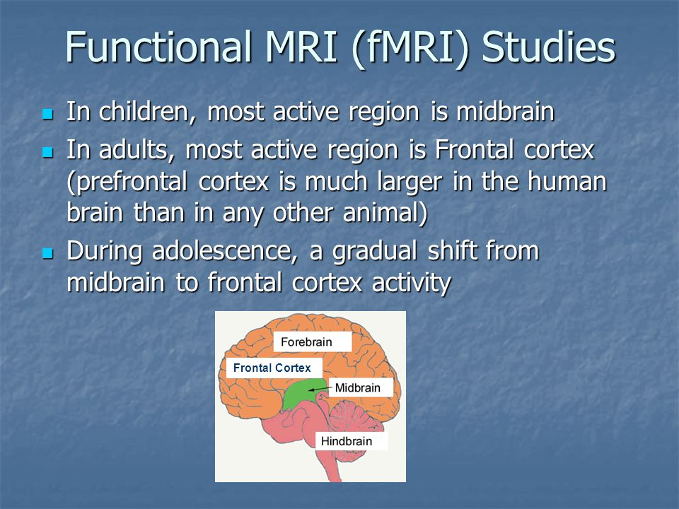 Functional MRI (fMRI) Studies In children, most active region is midbrain In children, most active region is midbrain In adults, most active region is Frontal cortex (prefrontal cortex is much larger in the human brain than in any other animal) In adults, most active region is Frontal cortex (prefrontal cortex is much larger in the human brain than in any other animal) During adolescence, a gradual shift from midbrain to frontal cortex activity During adolescence, a gradual shift from midbrain to frontal cortex activity Frontal Cortex