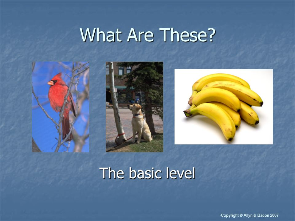 Copyright © Allyn & Bacon 2007 What Are These The basic level
