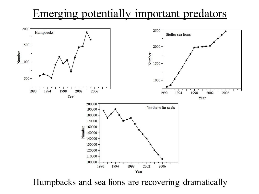 Emerging potentially important predators Humpbacks and sea lions are recovering dramatically