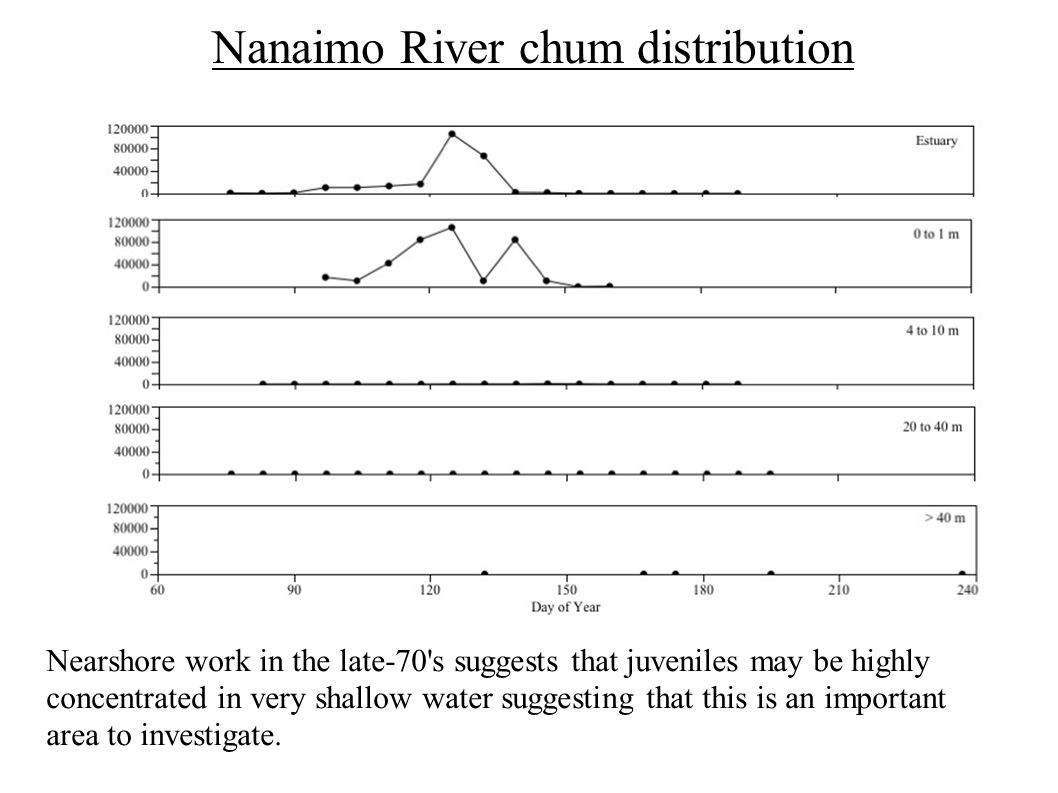 Nanaimo River chum distribution Nearshore work in the late-70 s suggests that juveniles may be highly concentrated in very shallow water suggesting that this is an important area to investigate.