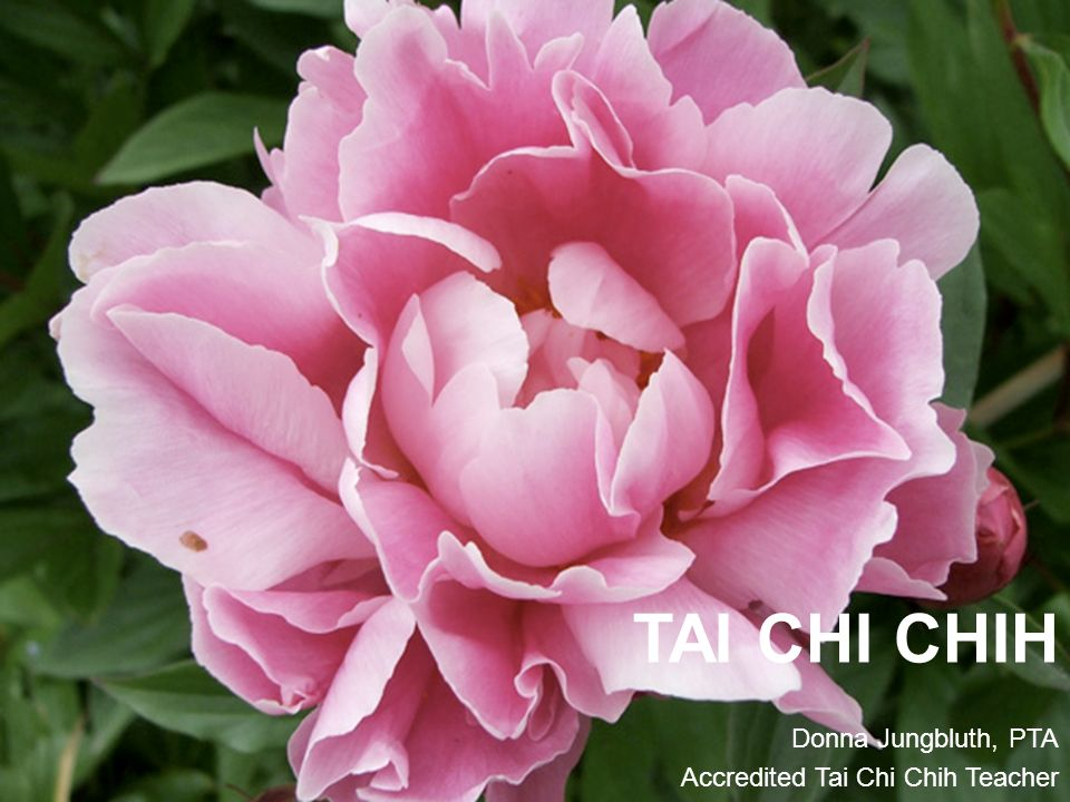 TAI CHI CHIH Donna Jungbluth, PTA Accredited Tai Chi Chih Teacher