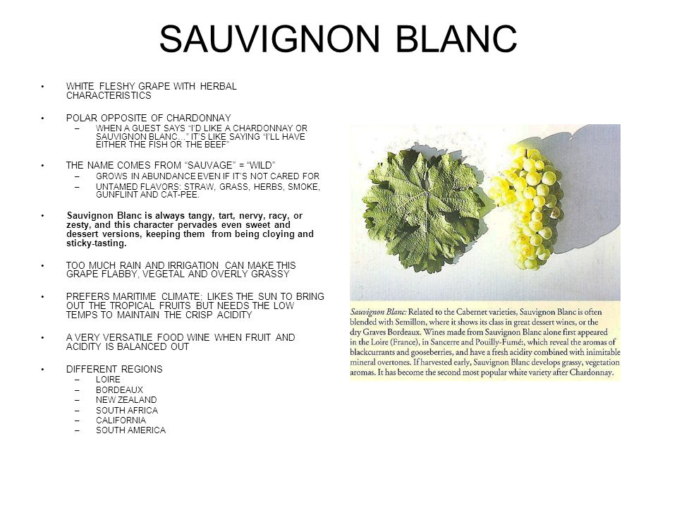 SAUVIGNON BLANC WHITE FLESHY GRAPE WITH HERBAL CHARACTERISTICS POLAR OPPOSITE OF CHARDONNAY –WHEN A GUEST SAYS ID LIKE A CHARDONNAY OR SAUVIGNON BLANC… ITS LIKE SAYING ILL HAVE EITHER THE FISH OR THE BEEF THE NAME COMES FROM SAUVAGE = WILD –GROWS IN ABUNDANCE EVEN IF ITS NOT CARED FOR –UNTAMED FLAVORS: STRAW, GRASS, HERBS, SMOKE, GUNFLINT AND CAT-PEE.
