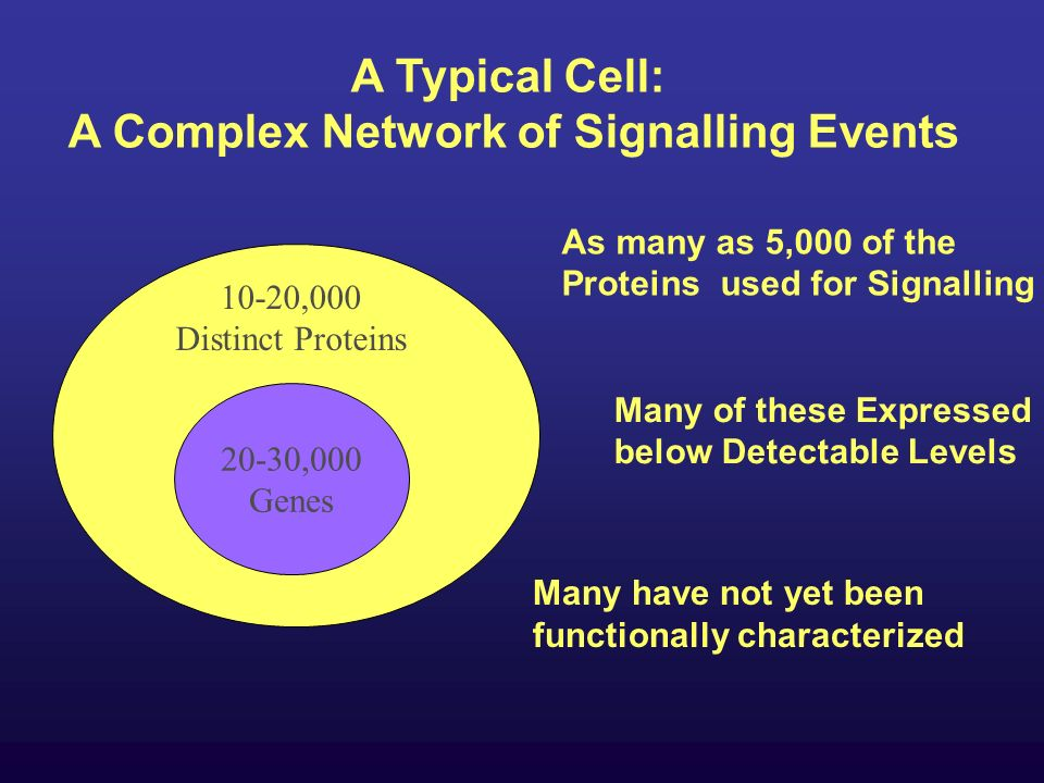 20-30,000 Genes 10-20,000 Distinct Proteins A Typical Cell: A Complex Network of Signalling Events As many as 5,000 of the Proteins used for Signalling Many of these Expressed below Detectable Levels Many have not yet been functionally characterized