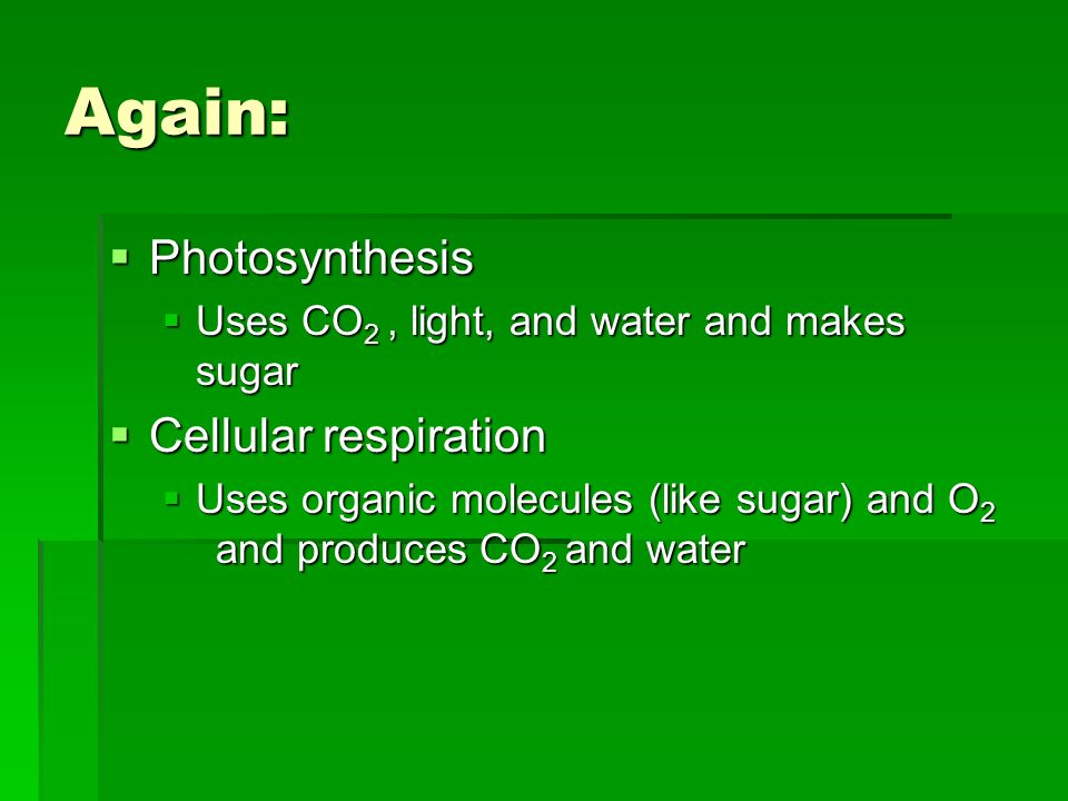 Again: Photosynthesis Photosynthesis Uses CO 2, light, and water and makes sugar Uses CO 2, light, and water and makes sugar Cellular respiration Cellular respiration Uses organic molecules (like sugar) and O 2 and produces CO 2 and water Uses organic molecules (like sugar) and O 2 and produces CO 2 and water