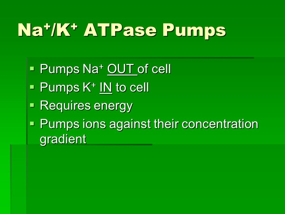 Na + /K + ATPase Pumps Pumps Na + OUT of cell Pumps Na + OUT of cell Pumps K + IN to cell Pumps K + IN to cell Requires energy Requires energy Pumps ions against their concentration gradient Pumps ions against their concentration gradient