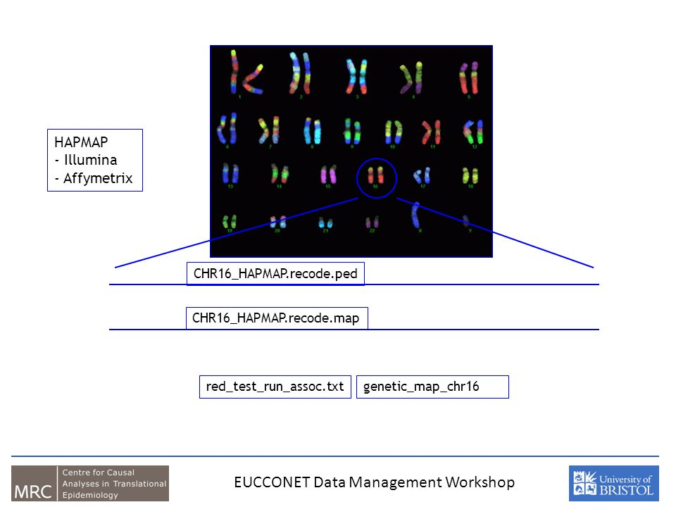 CHR16_HAPMAP.recode.map red_test_run_assoc.txtgenetic_map_chr16.txt HAPMAP - Illumina - Affymetrix CHR16_HAPMAP.recode.ped EUCCONET Data Management Workshop