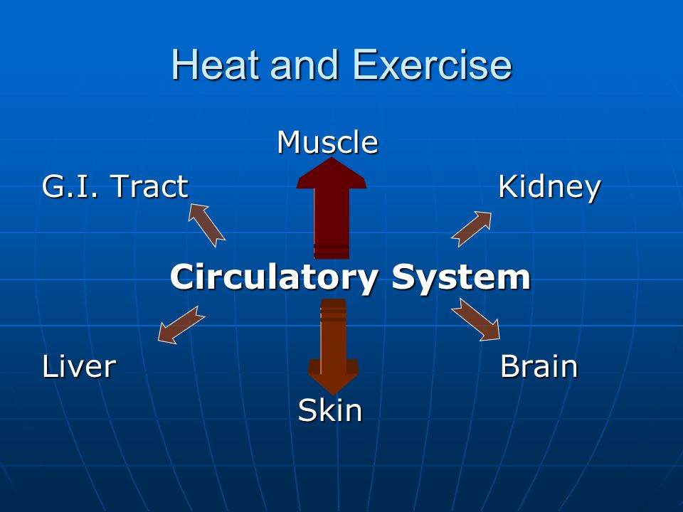 Heat and Exercise Muscle Muscle G.I.