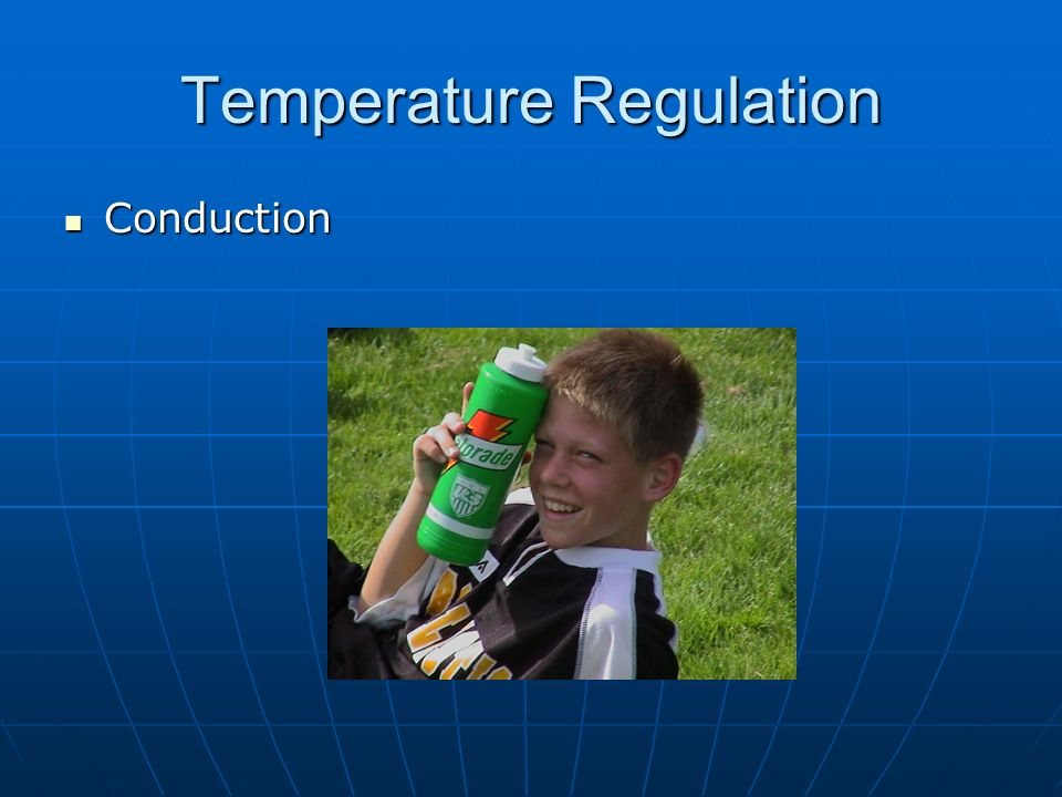 Temperature Regulation Conduction