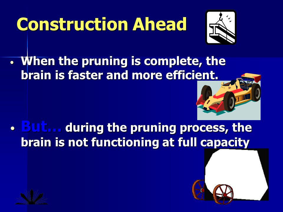 When the pruning is complete, the brain is faster and more efficient.
