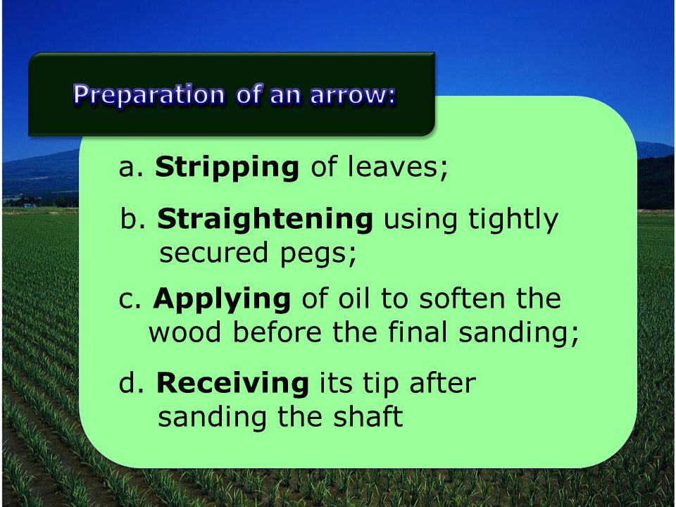 a. Stripping of leaves; b. Straightening using tightly secured pegs; c.