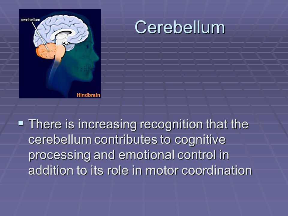 Cerebellum Cerebellum There is increasing recognition that the cerebellum contributes to cognitive processing and emotional control in addition to its role in motor coordination There is increasing recognition that the cerebellum contributes to cognitive processing and emotional control in addition to its role in motor coordination