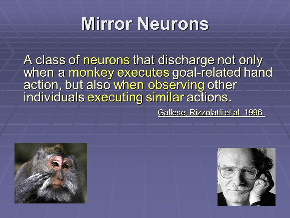 Mirror Neurons A class of neurons that discharge not only when a monkey executes goal-related hand action, but also when observing other individuals executing similar actions.