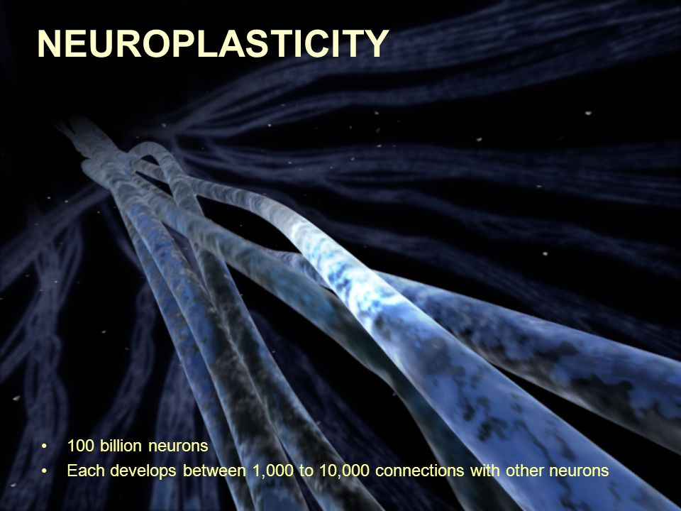 NEUROPLASTICITY 100 billion neurons Each develops between 1,000 to 10,000 connections with other neurons