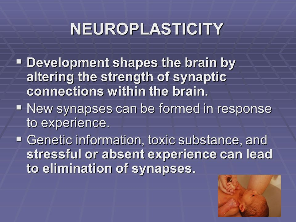 NEUROPLASTICITY Development shapes the brain by altering the strength of synaptic connections within the brain.