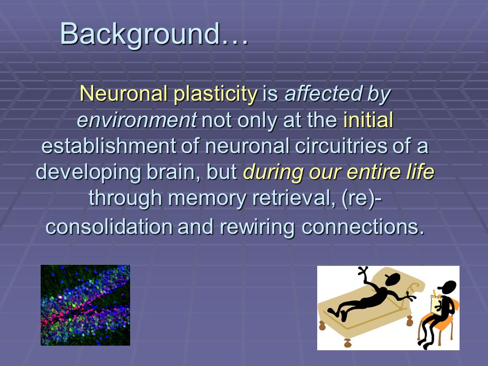 Neuronal plasticity is affected by environment not only at the initial establishment of neuronal circuitries of a developing brain, but during our entire life through memory retrieval, (re)- consolidation and rewiring connections.