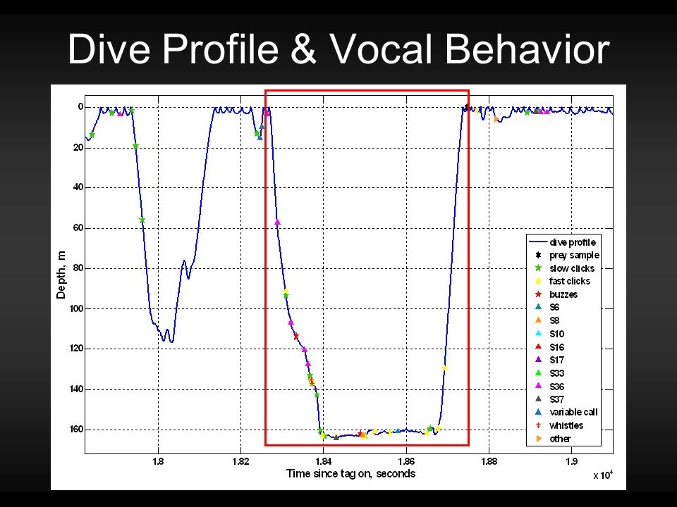 Dive Profile & Vocal Behavior