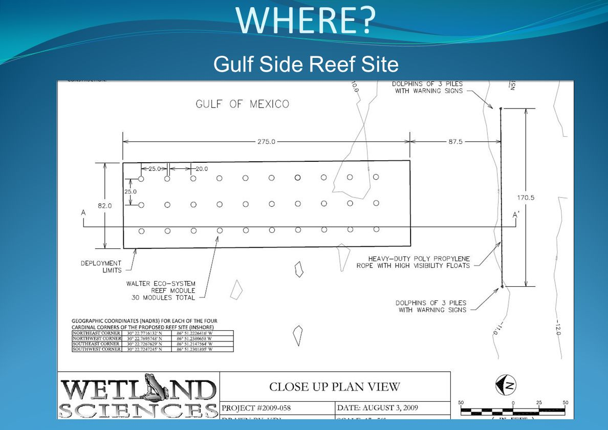 WHERE Gulf Side Reef Site