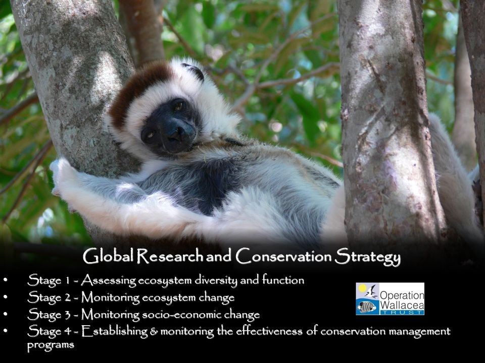 Global Research and Conservation Strategy Stage 1 - Assessing ecosystem diversity and function Stage 1 - Assessing ecosystem diversity and function Stage 2 - Monitoring ecosystem change Stage 2 - Monitoring ecosystem change Stage 3 - Monitoring socio-economic change Stage 3 - Monitoring socio-economic change Stage 4 - Establishing & monitoring the effectiveness of conservation management programs Stage 4 - Establishing & monitoring the effectiveness of conservation management programs