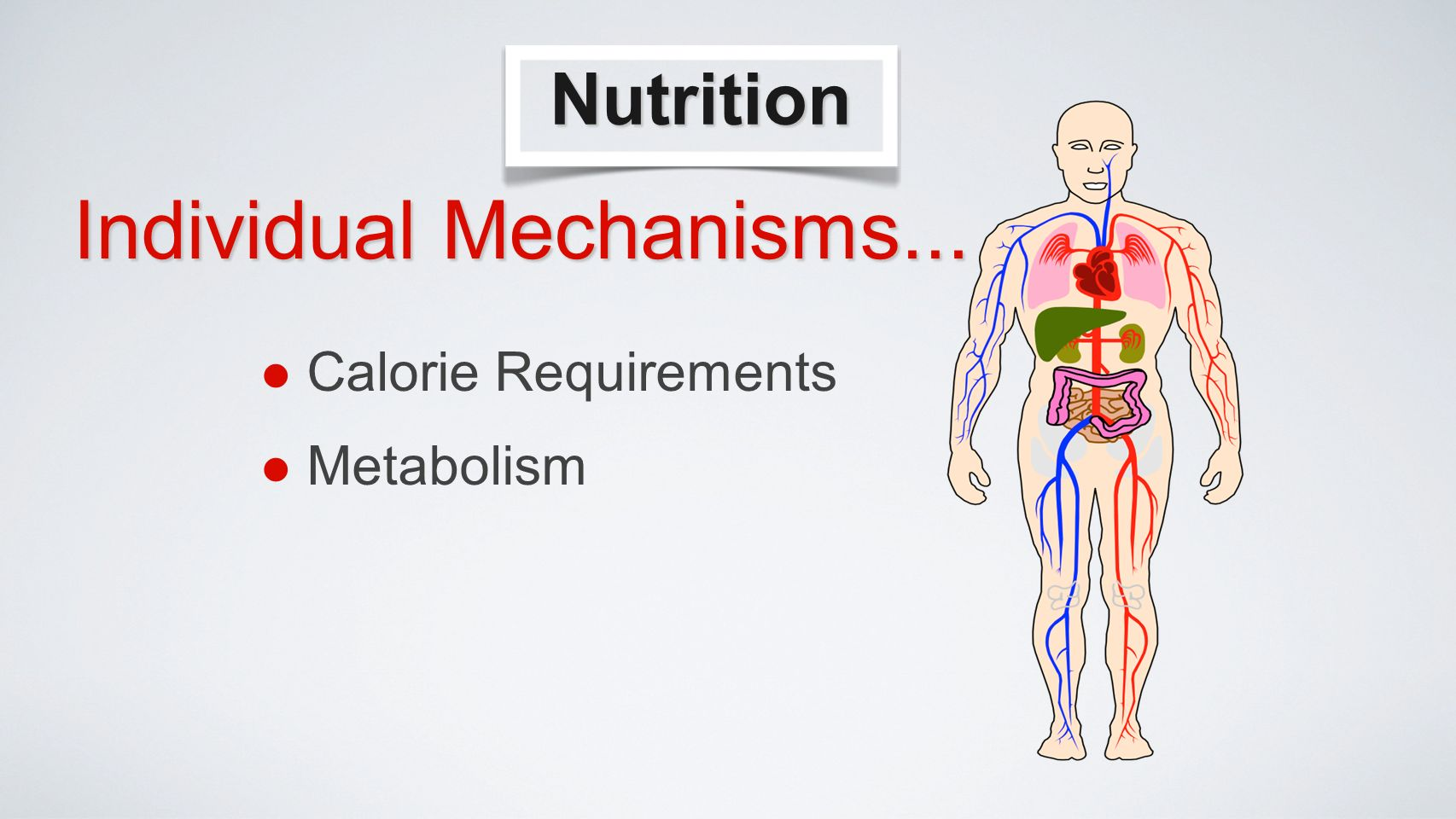 Nutrition Calorie Requirements Metabolism Individual Mechanisms...