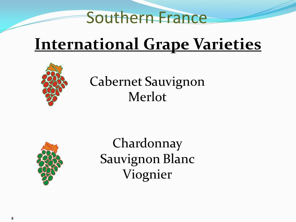 8 International Grape Varieties Cabernet Sauvignon Merlot Chardonnay Sauvignon Blanc Viognier Southern France