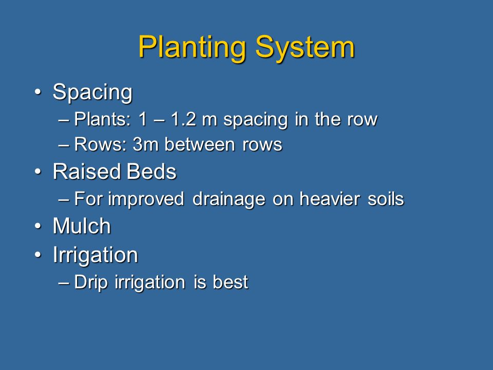 Planting System SpacingSpacing –Plants: 1 – 1.2 m spacing in the row –Rows: 3m between rows Raised BedsRaised Beds –For improved drainage on heavier soils MulchMulch IrrigationIrrigation –Drip irrigation is best
