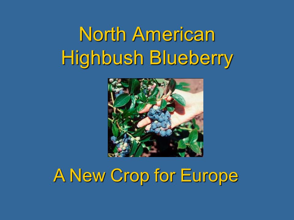 North American Highbush Blueberry A New Crop for Europe