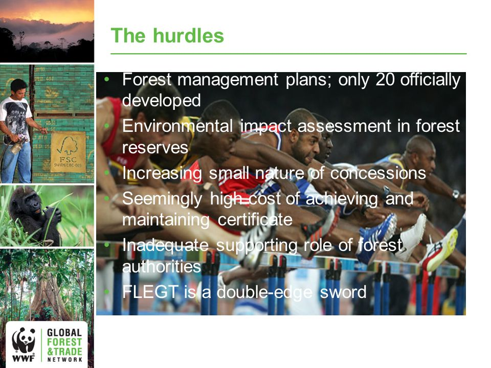 The hurdles Forest management plans; only 20 officially developed Environmental impact assessment in forest reserves Increasing small nature of concessions Seemingly high cost of achieving and maintaining certificate Inadequate supporting role of forest authorities FLEGT is a double-edge sword
