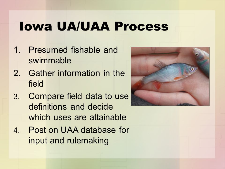 Iowa UA/UAA Process 1.Presumed fishable and swimmable Gather information in the field Compare field data to use definitions and decide which uses are attainable Post on UAA database for input and rulemaking