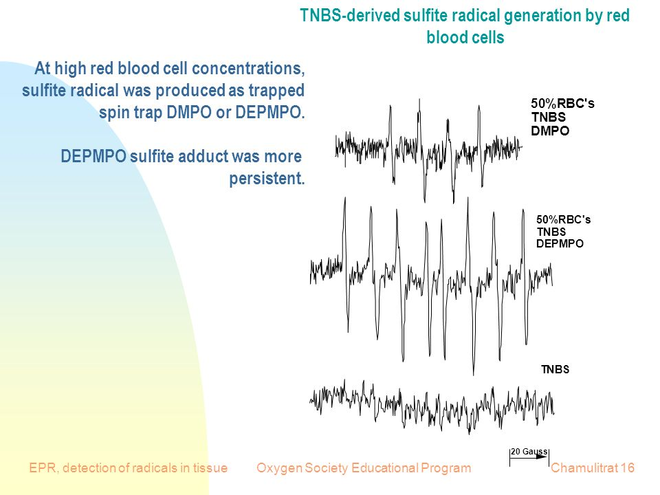 EPR, detection of radicals in tissueOxygen Society Educational ProgramChamulitrat Gauss 50%RBC s TNBS DMPO 50%RBC s TNBS DEPMPO TNBS TNBS-derived sulfite radical generation by red blood cells At high red blood cell concentrations, sulfite radical was produced as trapped spin trap DMPO or DEPMPO.