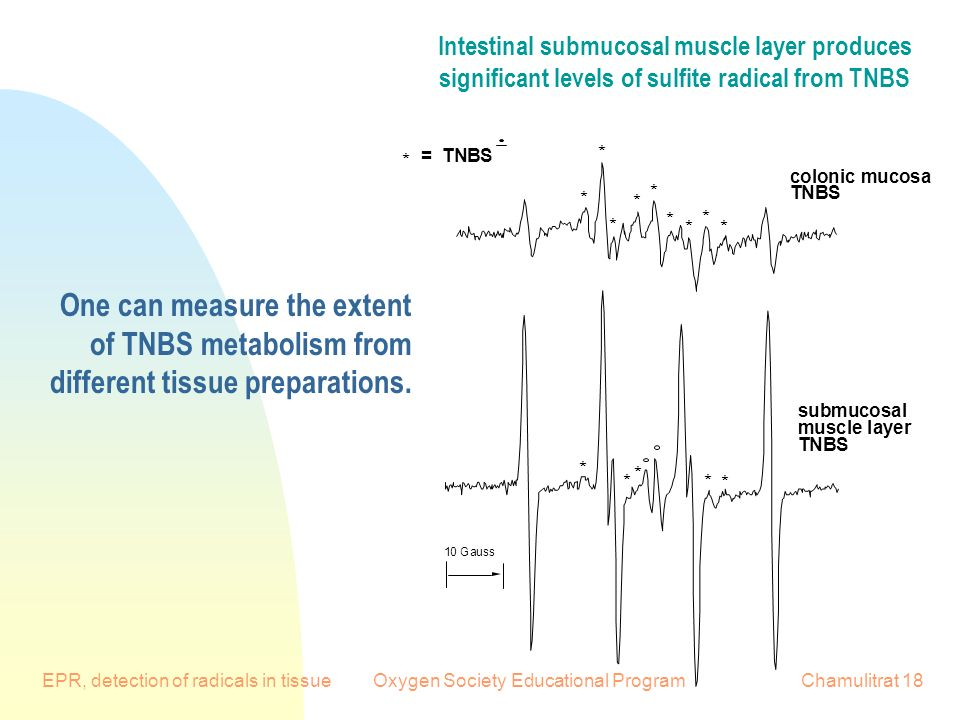 EPR, detection of radicals in tissueOxygen Society Educational ProgramChamulitrat Gauss colonic mucosa TNBS submucosal muscle layer TNBS * * * * * * * * * = TNBS * * * * * * Intestinal submucosal muscle layer produces significant levels of sulfite radical from TNBS One can measure the extent of TNBS metabolism from different tissue preparations.