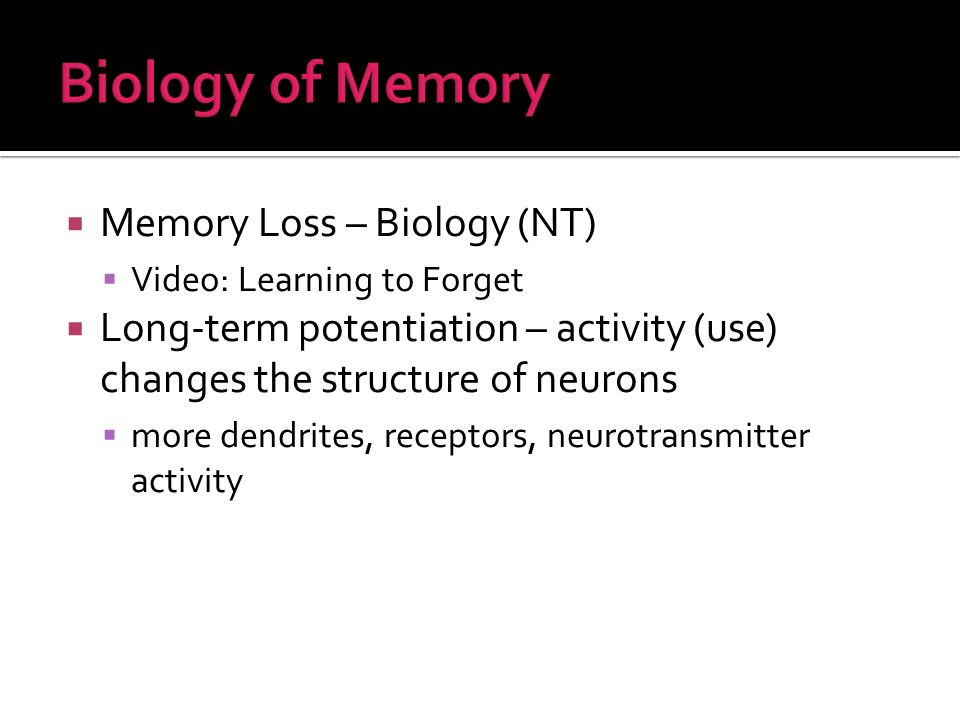Memory Loss – Biology (NT) Video: Learning to Forget Long-term potentiation – activity (use) changes the structure of neurons more dendrites, receptors, neurotransmitter activity
