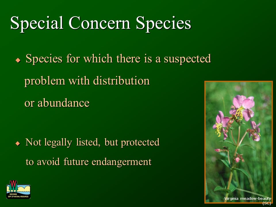 Special Concern Species Species for which there is a suspected Species for which there is a suspected problem with distribution problem with distribution or abundance or abundance Not legally listed, but protected Not legally listed, but protected to avoid future endangerment to avoid future endangerment Virginia meadow-beauty (SC)
