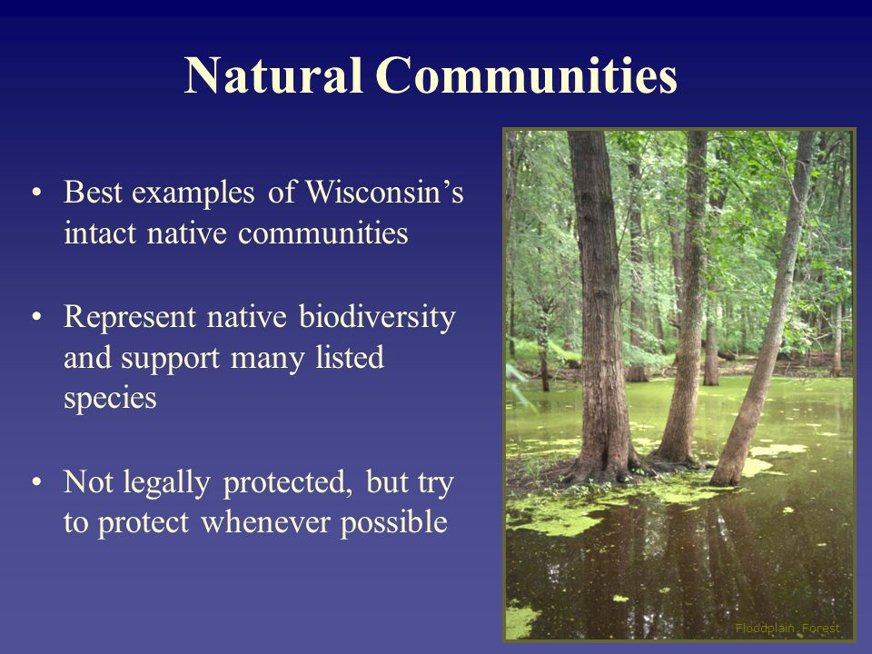Natural Communities Best examples of Wisconsins intact native communities Represent native biodiversity and support many listed species Not legally protected, but try to protect whenever possible Floodplain Forest