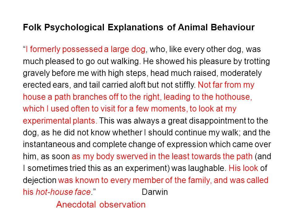 Folk Psychological Explanations of Animal Behaviour I formerly possessed a large dog, who, like every other dog, was much pleased to go out walking.