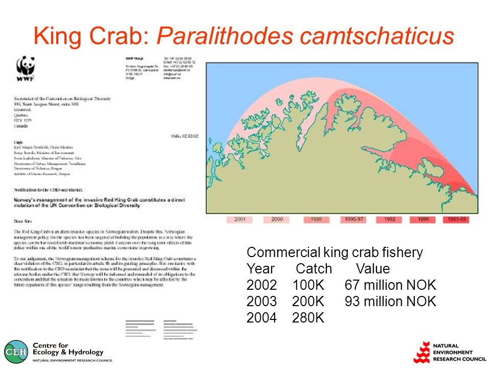 King Crab: Paralithodes camtschaticus Commercial king crab fishery YearCatch Value K67 million NOK K93 million NOK K