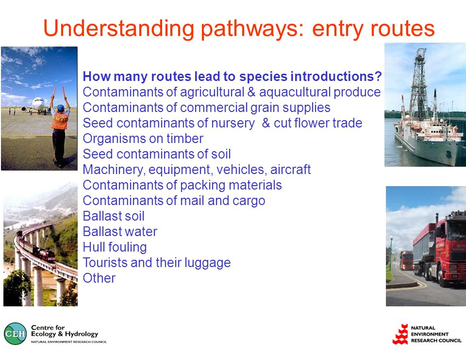 Understanding pathways: entry routes How many routes lead to species introductions.