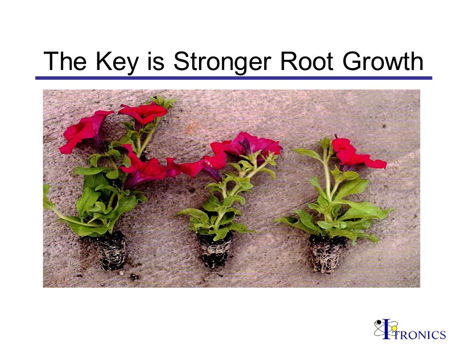 The Key is Stronger Root Growth